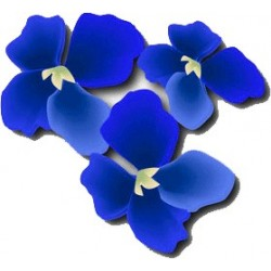 Perfume BLUES INTENSE