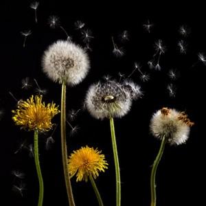 ¿Cómo combatir las alergias con la limpieza?