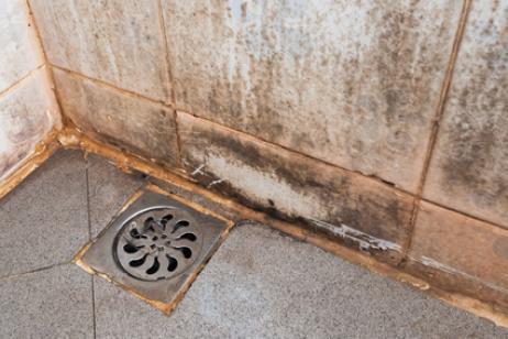 Eliminar las machas de moho y hongos en baños y cocinas - Blog de ...