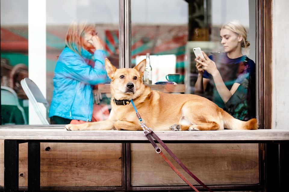 Medidas de higiene en restaurantes 'pet friendly' 0